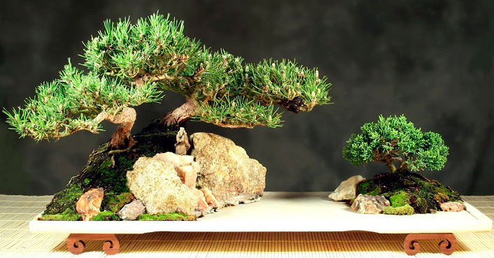 Bonsai plant Meaning