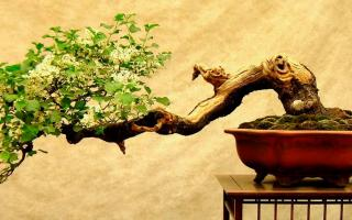 Bonsai Tips and Tricks