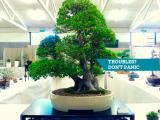 troubles bonsai